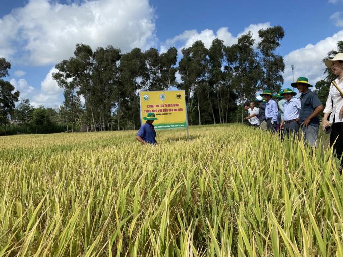 Phân đạm hạt vàng Đầu trâu 46A+ - giải pháp cho nền nông nghiệp bền vững